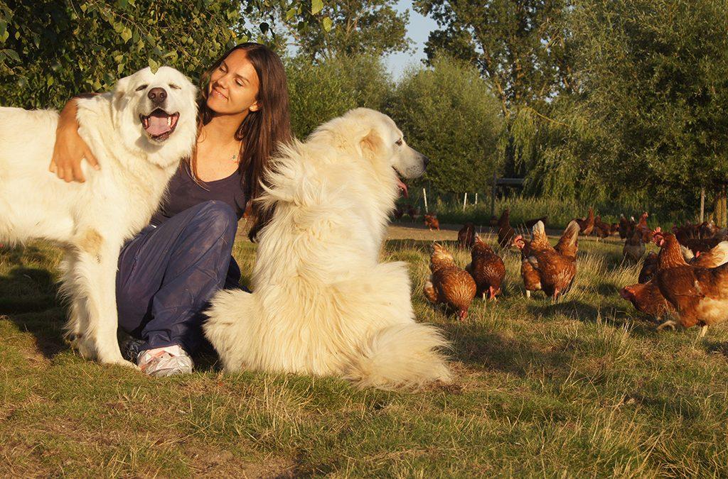 Addi und Amigo: zwei Hunde und eine Mission
