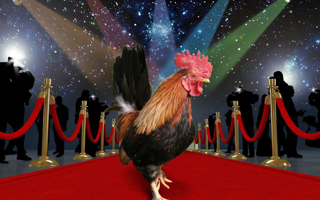 Berühmte Hühner – gefiederte Celebrities