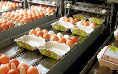 Vom Stall in den Supermarkt – der Weg unserer haehnlein-Eier