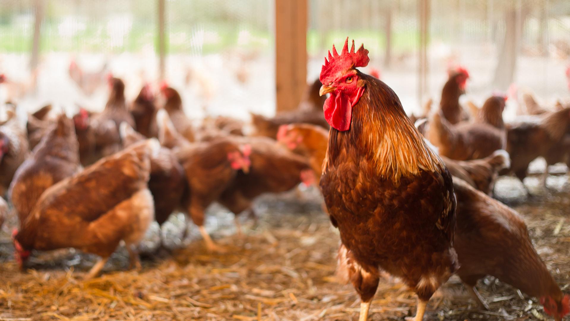 haehnlein Bio-Eier Warenversorgung