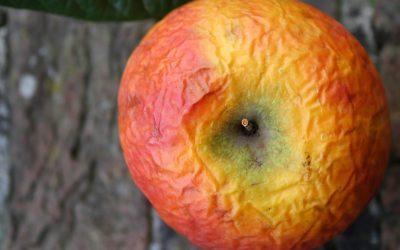 Problem Lebensmittelverschwendung – Ursachen und Lösungsvorschläge